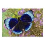 Fotografía de Sammamish Washington de la mariposa  Impresión Fotográfica