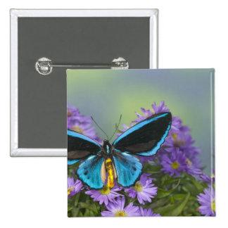 Fotografía de Sammamish Washington de la mariposa  Pin