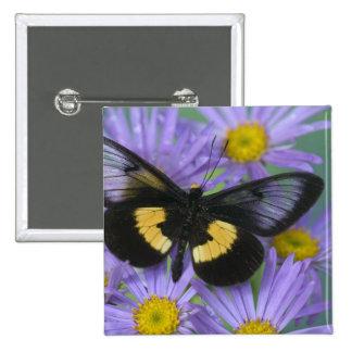 Fotografía de Sammamish Washington de la mariposa  Pins