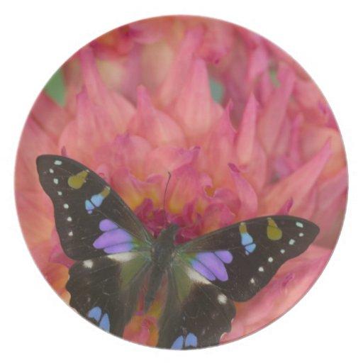 Fotografía de Sammamish Washington de la mariposa  Plato De Cena