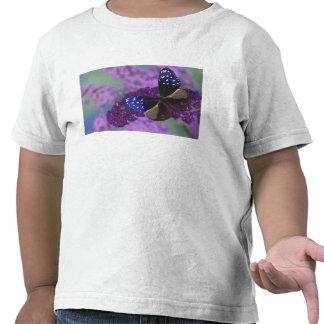 Fotografía de Sammamish Washington de la mariposa Camisetas