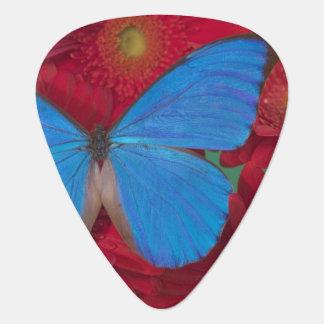 Fotografía de Sammamish Washington de la mariposa  Plumilla De Guitarra