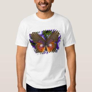 Fotografía de Sammamish Washington de la mariposa Polera