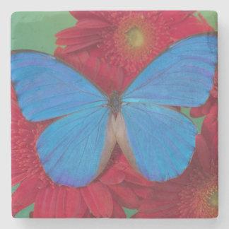 Fotografía de Sammamish Washington de la mariposa  Posavasos De Piedra