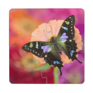 Fotografía de Sammamish Washington de la mariposa  Posavasos De Puzzle