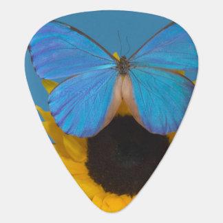 Fotografía de Sammamish Washington de la mariposa  Púa De Guitarra