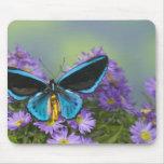 Fotografía de Sammamish Washington de la mariposa  Tapete De Ratón