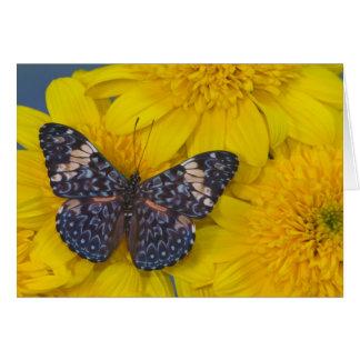 Fotografía de Sammamish Washington de la mariposa  Tarjeton