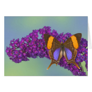 Fotografía de Sammamish Washington de la mariposa  Tarjetas