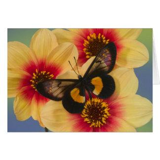 Fotografía de Sammamish Washington de la mariposa  Felicitación