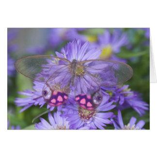 Fotografía de Sammamish Washington de la mariposa  Felicitaciones