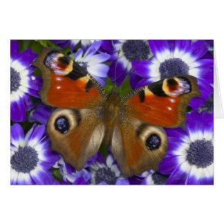 Fotografía de Sammamish Washington de la mariposa  Felicitacion