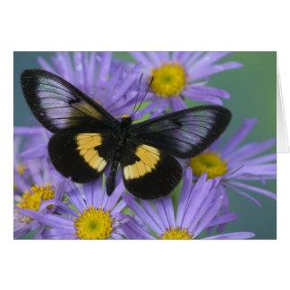 Fotografía de Sammamish Washington de la mariposa  Tarjetón