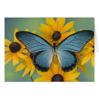 Fotografía de Sammamish Washington de la mariposa  Tarjeta