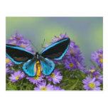 Fotografía de Sammamish Washington de la mariposa Tarjetas Postales