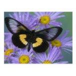 Fotografía de Sammamish Washington de la mariposa Tarjeta Postal