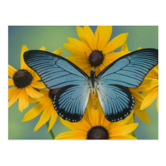 Fotografía de Sammamish Washington de la mariposa  Postales