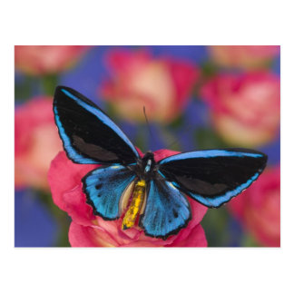 Fotografía de Sammamish Washington de la mariposa  Postal