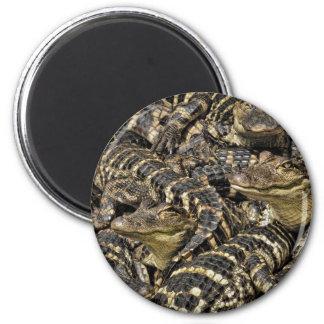 Fotografía de una vaina de los cocodrilos del bebé imán redondo 5 cm