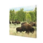 Fotografía del animal de la naturaleza del bisonte lona envuelta para galerías