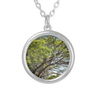 Fotografía del árbol del verano colgante redondo