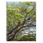 Fotografía del árbol del verano libretas