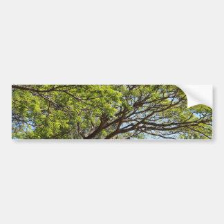 Fotografía del árbol del verano pegatina para auto