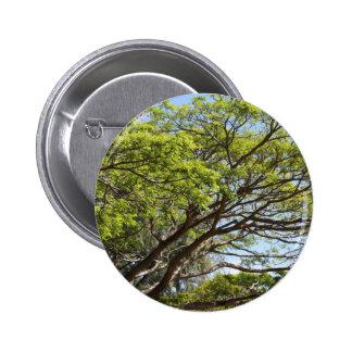 Fotografía del árbol del verano pin