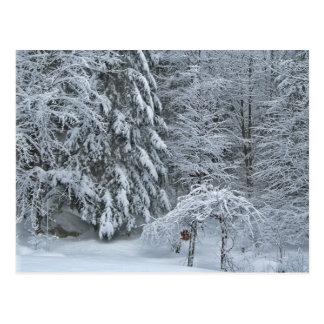 Fotografía del bosque de la nieve del invierno tarjeta postal
