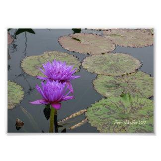 Fotografía del cojín de lirio del jardín botánico cojinete
