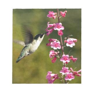 fotografía del colibrí bloc de notas