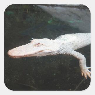 Fotografía del color del cocodrilo del albino de l pegatinas cuadradases