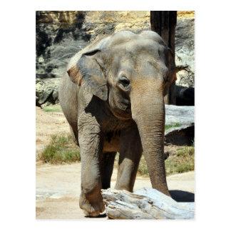 Fotografía del elefante asiático tarjetas postales