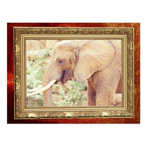 Fotografía del elefante rosado postales