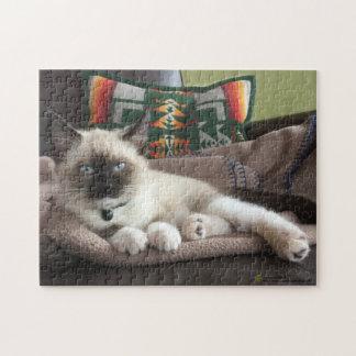 Fotografía del encanto del gatito puzzles con fotos