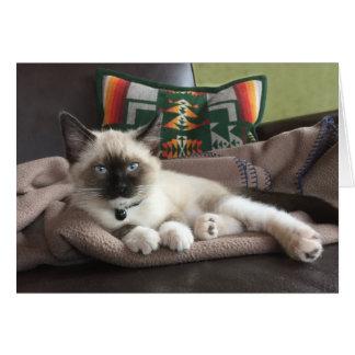 Fotografía del encanto del gatito tarjeta de felicitación