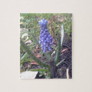 Fotografía del flor del jacinto de uva rompecabeza con fotos