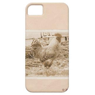Fotografía del gallo del estilo del vintage iPhone 5 fundas