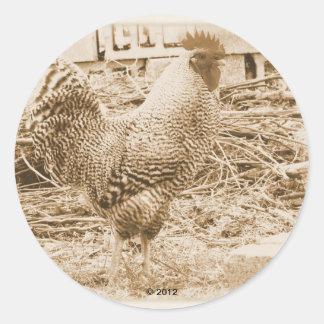 Fotografía del gallo del estilo del vintage pegatina redonda