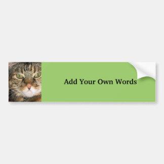 Fotografía del gato pegatina de parachoque