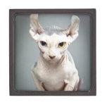 Fotografía del gato de la esfinge del duende caja de recuerdo de calidad