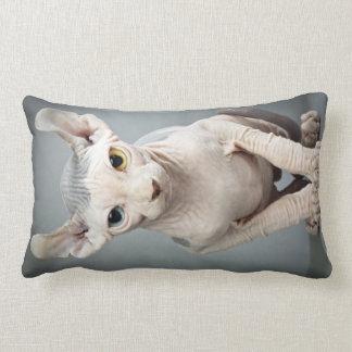 Fotografía del gato de la esfinge del duende cojín