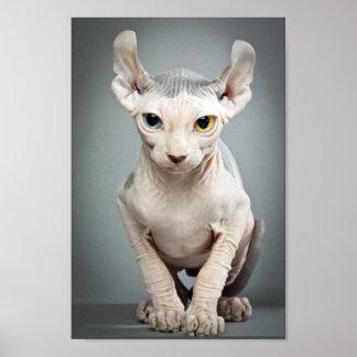 Fotografía del gato de la esfinge del duende póster