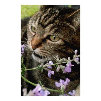 Fotografía del gato papeleria personalizada