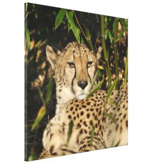 Fotografía del guepardo lona envuelta para galerías