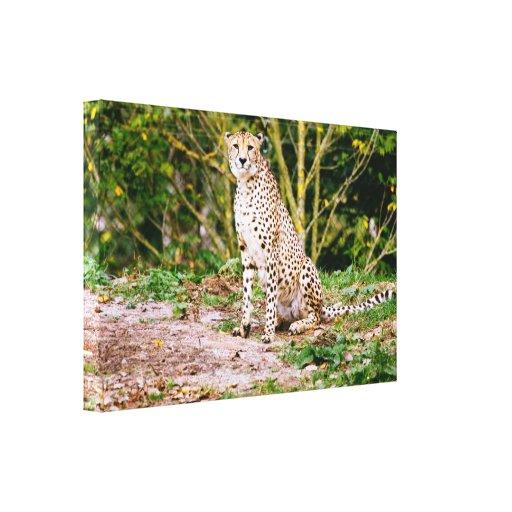 Fotografía del guepardo que se sienta impresiones de lienzo