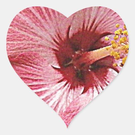 Fotografía del hibisco colcomanias de corazon