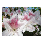 Fotografía del jardín de flores de la azalea flora