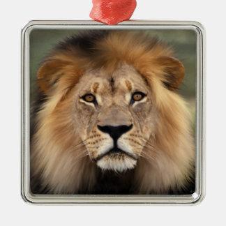 Fotografía del león adorno navideño cuadrado de metal