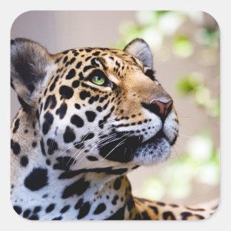 Fotografía del leopardo pegatina cuadrada